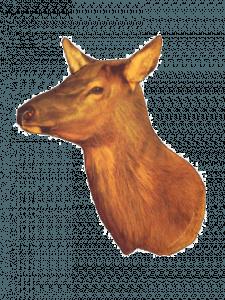 DIY elk hunt do it yourself elk hunting guide Elk Decoy | Pure Hunting