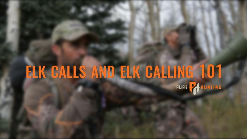 elk calls elk calling 101 | Pure Hunting