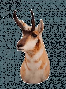 diy antelope hunting tips | Pure Hunting
