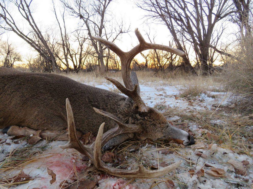 rut hunting tips public land | Pure Hunting