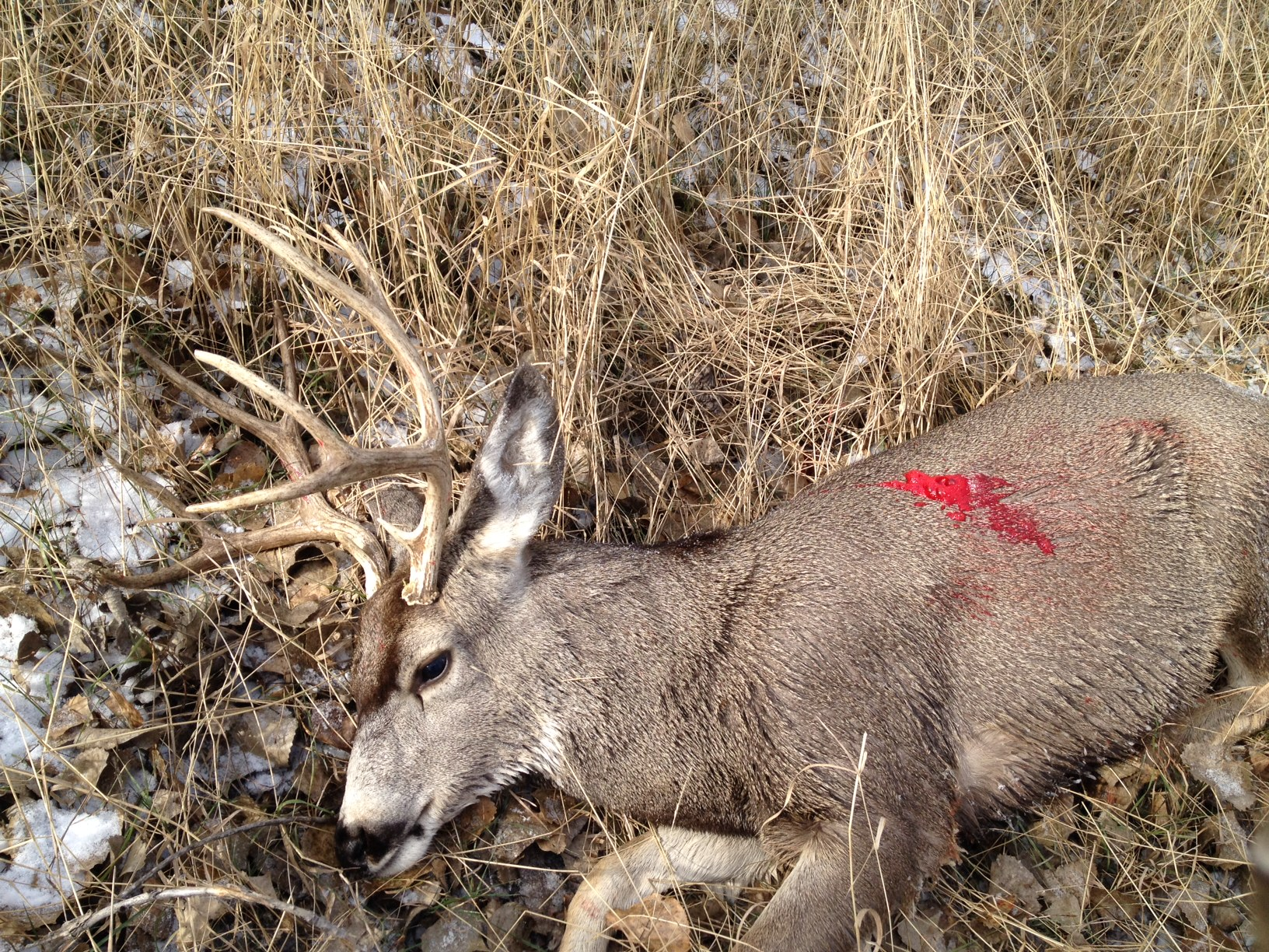 Mule Deer Hunting Tips and Tactics
