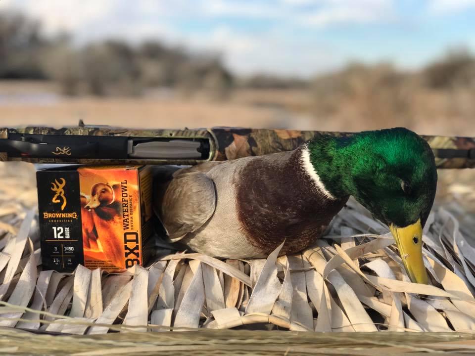 Choosing an All-Around Shotgun maxus feature pic 2
